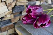 Purple tulips next to a stack of wood — Stock Photo