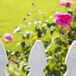 White picket fence and roses — Stock Photo #74790871