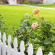 White picket fence and roses — Stock Photo #74790953