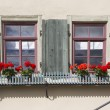 Two old windows with shutters and flowers — Stock Photo #77273740