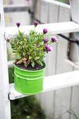 Fiori rosa in un vaso in un giardino — Foto Stock