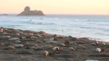 Sea lions on the beach in California — Stock Video