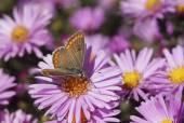 Butterfly on a flower — Stockfoto