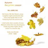 Autumn falling yellow leaves — Stock Photo