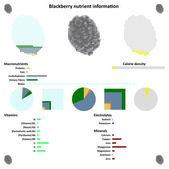 Blackberry Nutrient information — Stock Vector