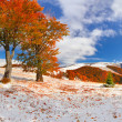 Постер, плакат: First snow in the forest in the mountains