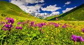 As montanhas do cáucaso — Fotografia Stock