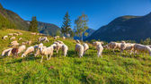Alpine pastures in the Slovenian Alps. — Stock Photo