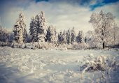 Winter landscape with fir-trees and fresh snow. — Stock Photo