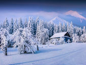 Heavy snowfall covered the trees and houses — Stock Photo