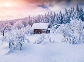 Sunny winter landscape in the mountain forest.  — Stock Photo