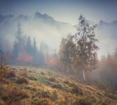 Misty autumn forest in the mountains — Stock Photo