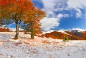 First snow in the forest in the mountains. — Stock Photo