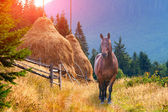 Horse in the mountains in autumn — Foto Stock