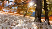First snow in the autumn forest — Stock Photo