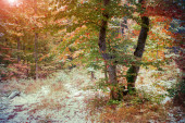 First snow in the autumn forest. — Stock Photo