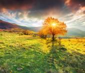 Autumn tree against dramatic sky — Stock Photo
