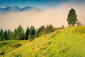 Morning in the Triglav national park Slovenia — Stock Photo