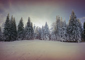 Colorful winter morning in the mountain forest — Stock Photo
