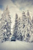 Car in snowy forest — Stock Photo