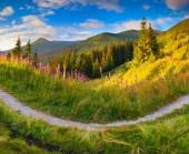 Pembe çiçekli dağlar. — Stok fotoğraf