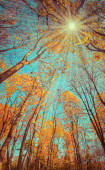 Majestic colorful forest with sunny beams. — Stock Photo