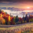 Colorful autumn sunrise in the mountains. — Stock Photo #56310075