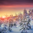 Winter sunrise in the mountain forest — Stock Photo #56310101