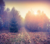 Misty sunrise in the autumn forest. — Stock Photo