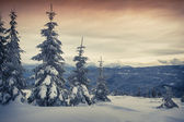 Foggy winter sunrise in the mountain forest.  — Stock Photo