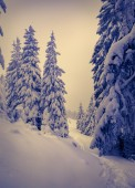 Winter landscape with fir-trees and fresh snow.  — Stockfoto