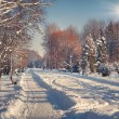 Winter in the city park. — Stock Photo #56615837