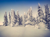 Winter  in the mountain forest. — Stock Photo