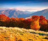 Podzim na horách — Stock fotografie