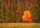 Lonely little birch — Zdjęcie stockowe