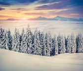 Winter sunrise in the foggy mountains. — Stock Photo