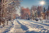 Winter  in the city park. — Stock Photo