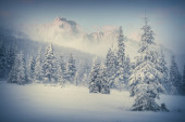 Foggy winter morning in the mountain forest.  — Stock Photo
