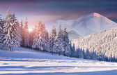 Sunrise in the snowy mountains — Stock Photo