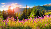 Mountains with pink flowers. — Stock Photo