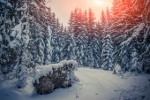 Winter sunrise in the mountain forest — Stockfoto