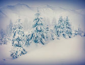 Foggy winter morning in a mountains forest — Stock fotografie