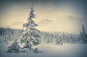 Foggy winter morning in the mountains.  — Stock Photo
