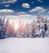 Hoarfrost and snow in mountains — Stock Photo