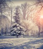 árboles cubiertos de nieve en el parque de la ciudad — Foto de Stock