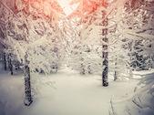 Paisagem do inverno na floresta. — Foto Stock