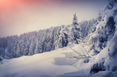 Snow in mountain forest. — Stock fotografie