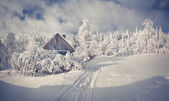 Trees and houses in the mountain village. — Stock Photo