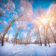 Colorful winter landscape in the city park — Stock Photo #59395335