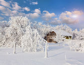 Heavy snowfall covered the trees and houses in village. — Stock Photo
